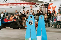 Seattle FlyDogs 2